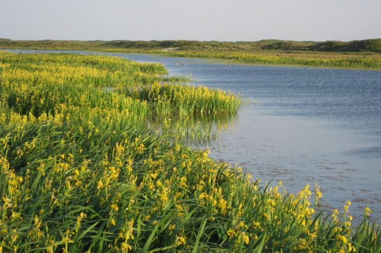 VakantiehuisNederland - Waddeneilanden: De Krim Texel 1  [32]