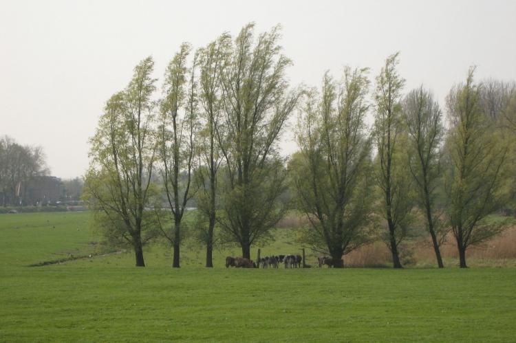 VakantiehuisNederland - Zuid-Holland: Hoeve Hoogst Tevreden  [33]