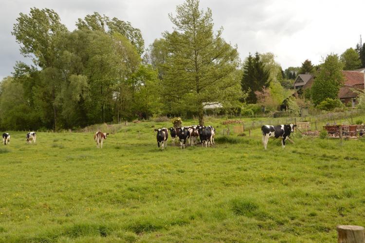 FerienhausNiederlande - Limburg: Hoeve A Gen Water  [33]