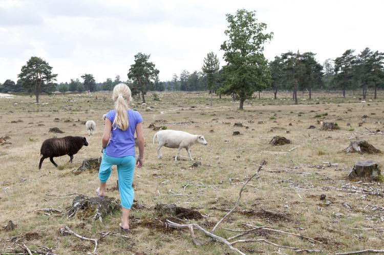 Holiday homeNetherlands - Friesland: Buitenplaats De Hildenberg 1  [18]