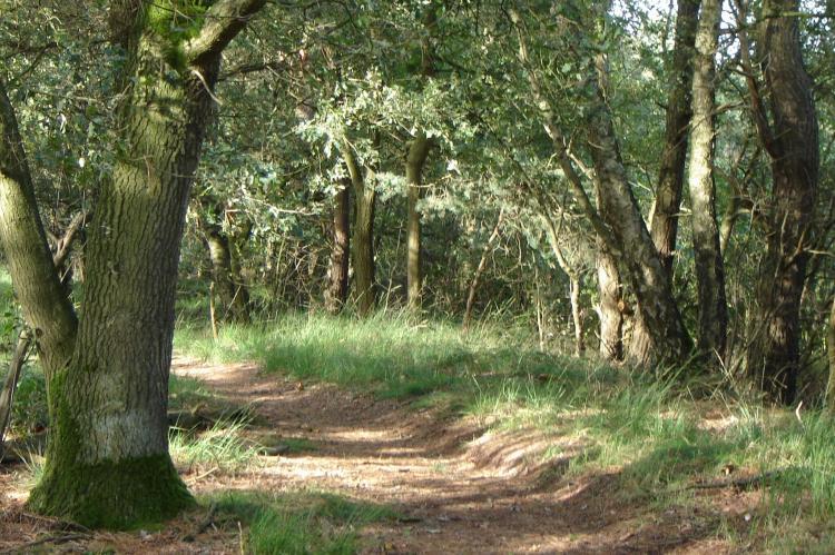 Holiday homeNetherlands - Noord-Brabant: de Lansert  [48]