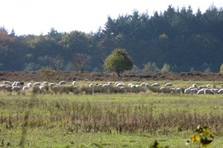 Holiday homeNetherlands - Drenthe: Zonnehoek  [25]