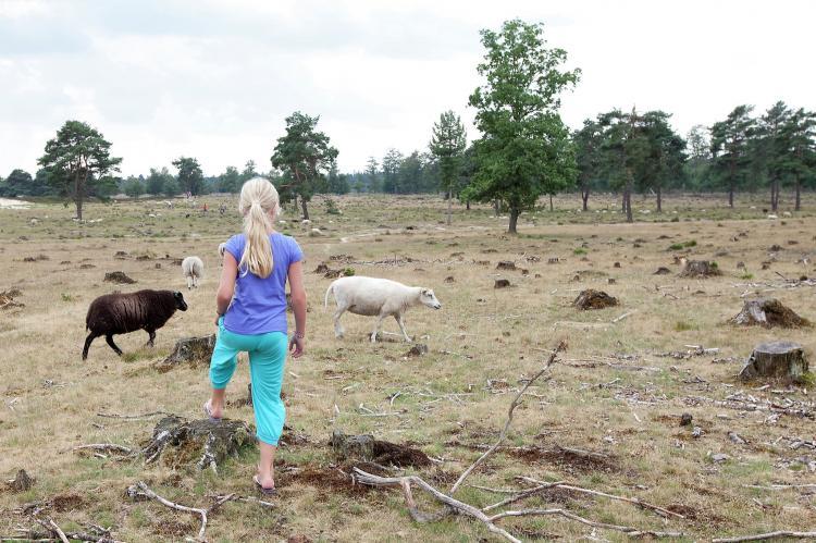 VakantiehuisNederland - Friesland: Buitenplaats De Hildenberg 7  [24]
