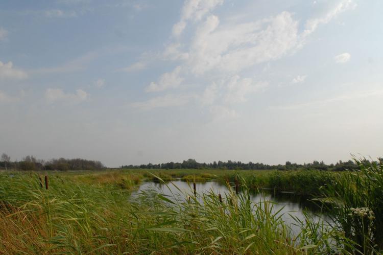 FerienhausNiederlande - Friesland: Buitenplaats It Wiid  [14]