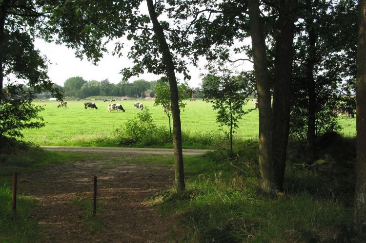 VakantiehuisNederland - Noord-Brabant: Vakantiepark Herperduin 7  [17]