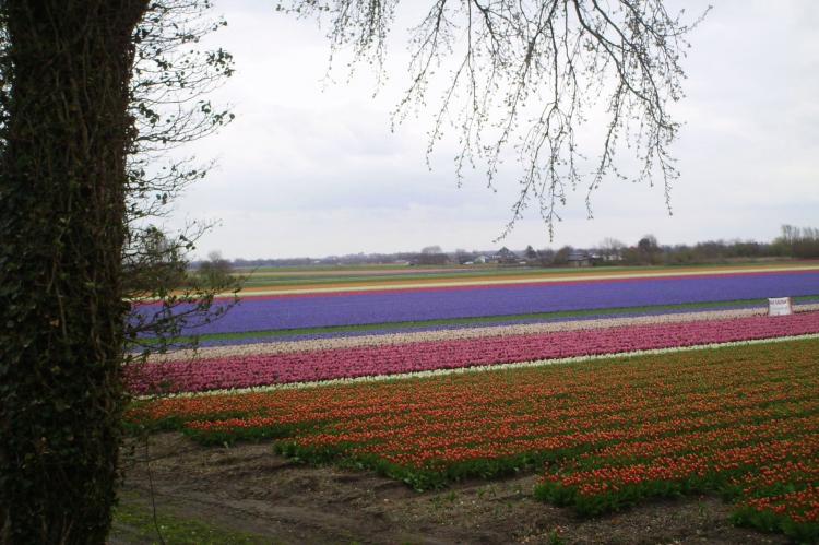 FerienhausNiederlande - Nord-Holland: Schoorlseduyn  [27]