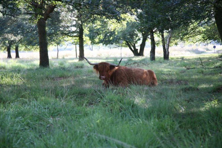 VakantiehuisNederland - Drenthe: Landgoed Het Grote Zand - Type F10 met sauna 1  [36]
