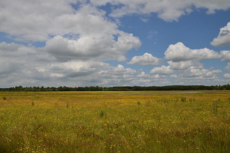 FerienhausNiederlande - Drenthe: Landhuis de Linde  [35]