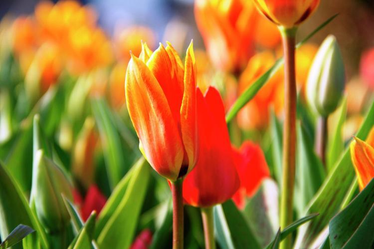 VakantiehuisNederland - Zuid-Holland: Bungalowpark de Gouden Spar 3  [27]