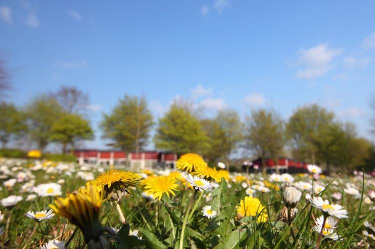 Holiday homeNetherlands - Limburg: Bungalowpark Schin op Geul 3  [26]