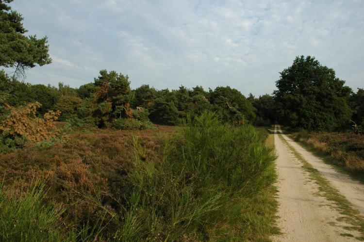VakantiehuisNederland - Gelderland: Landgoed De IJsvogel 5  [10]