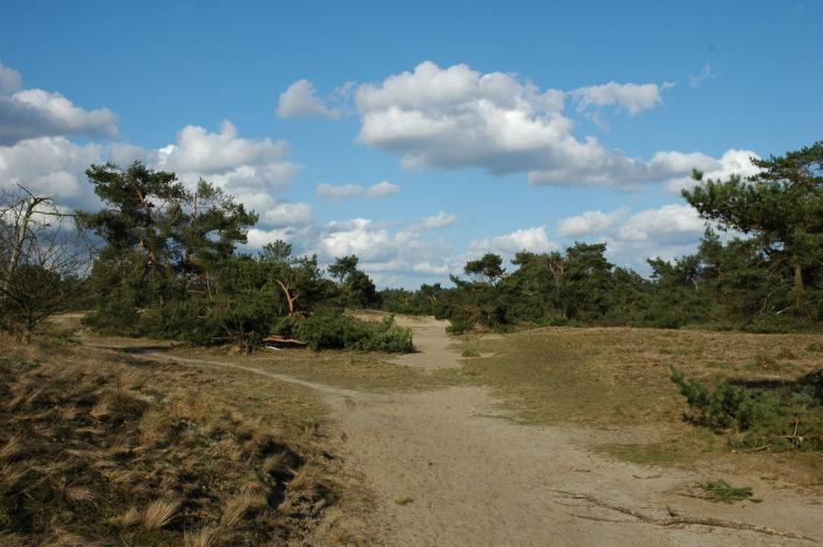 Holiday homeNetherlands - Gelderland: Landgoed De IJsvogel 4  [20]
