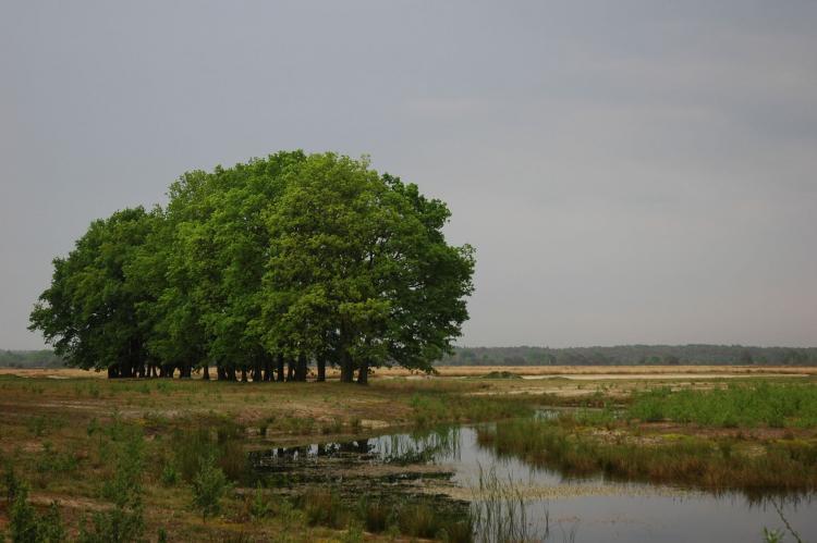 VakantiehuisNederland - Gelderland: Landgoed De IJsvogel 3  [11]
