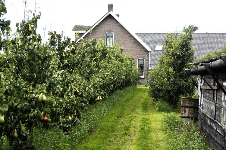 VakantiehuisNederland - Zeeland: Licykreken  [19]