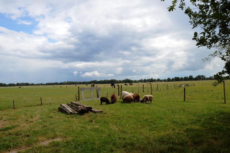 VakantiehuisNederland - Drenthe: Wapse  [29]