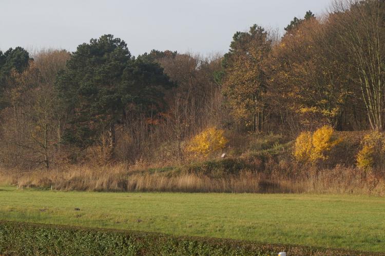 VakantiehuisNederland - Zuid-Holland: Bungalowpark 't Lappennest 1  [15]