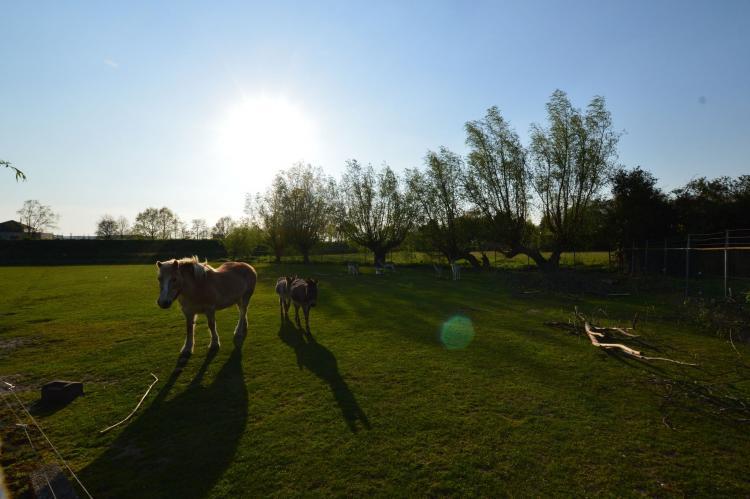 Holiday homeNetherlands - Noord-Brabant: Pipowagen de Weideblick  [22]