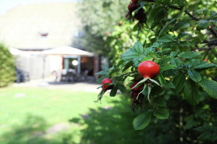 VakantiehuisNederland - Zeeland: Appartement De Biezenpolder  [35]