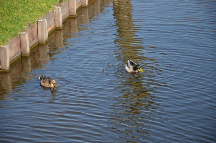 VakantiehuisNederland - Noord-Holland: Resort de Rijp 6  [24]