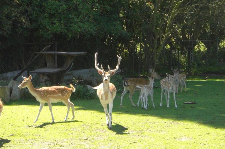 VakantiehuisNederland - Noord-Brabant: De Herberg  [32]