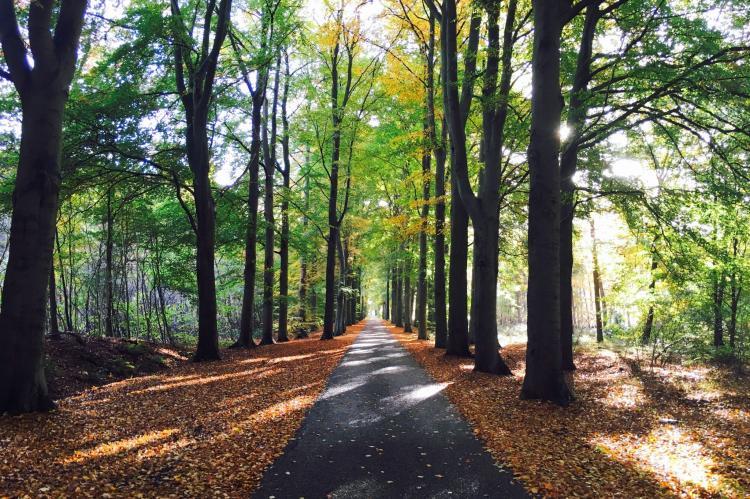 Holiday homeNetherlands - Drenthe: The Forest Cottage  [36]