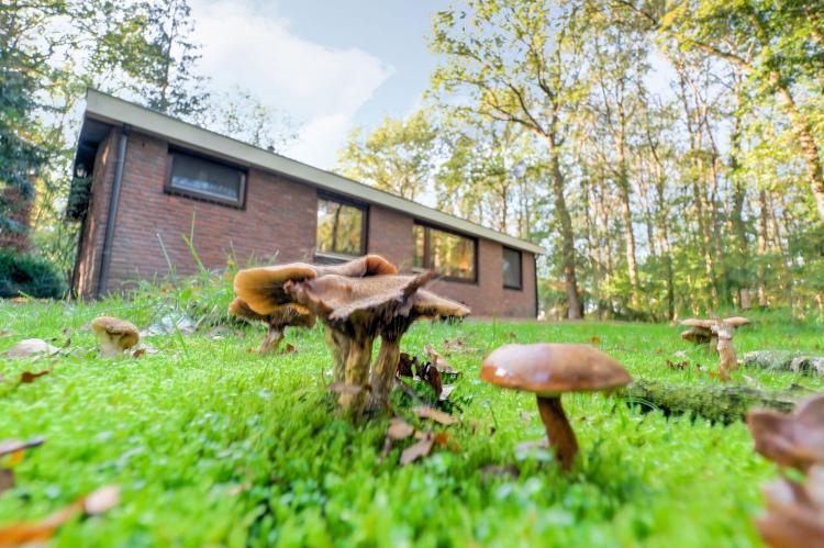 Holiday homeNetherlands - Drenthe: The Forest Cottage  [26]