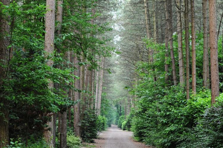 VakantiehuisNederland - Noord-Brabant: Parc de Kievit 3  [21]