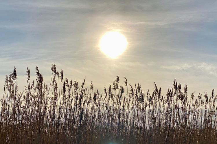 Holiday homeNetherlands - Overijssel: Chaletpark Kroondomein Giethoorn 5  [26]