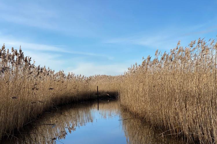 Holiday homeNetherlands - Overijssel: Chaletpark Kroondomein Giethoorn 5  [27]