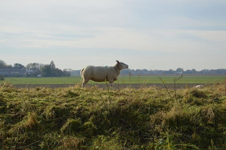 Holiday homeNetherlands - Noord-Brabant: Het Biesbosch huisje  [31]