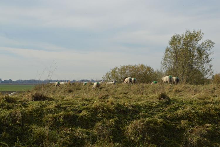 Holiday homeNetherlands - Noord-Brabant: Het Biesbosch huisje  [34]