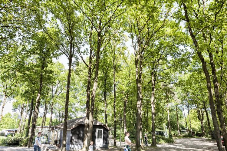 VakantiehuisNederland - Overijssel: Vakantiepark de Vossenburcht 6  [27]