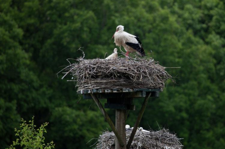 VakantiehuisNederland - Overijssel: Vakantiepark de Vossenburcht 1  [36]