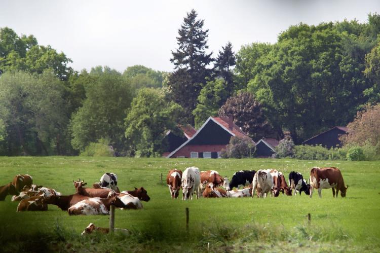 VakantiehuisNederland - Gelderland: Recreatiepark Het Winkel 2  [29]