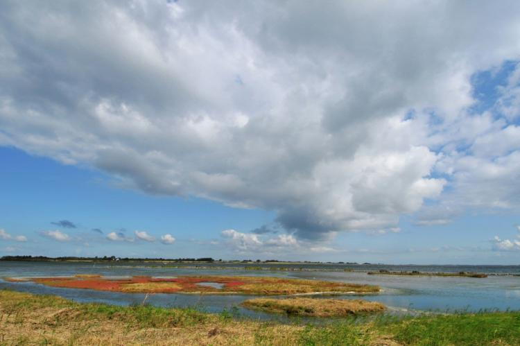 VakantiehuisNederland - Zuid-Holland: Oasis Punt-West Hotel & Beachresort 5  [53]