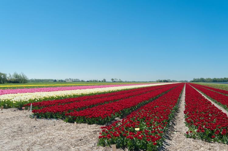 VakantiehuisNederland - Noord-Holland: Wielewaal  [24]