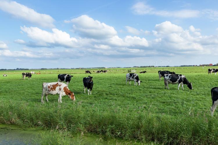 VakantiehuisNederland - Friesland: 't Friese Koetshuis  [28]