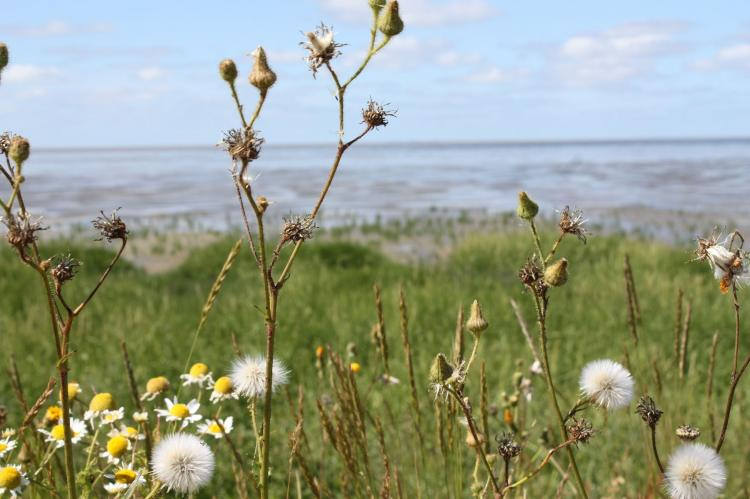 VakantiehuisNederland - Friesland: Zeedijk I  [33]