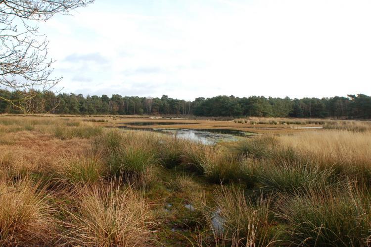 Holiday homeNetherlands - Noord-Brabant: Het Leenderbos  [30]
