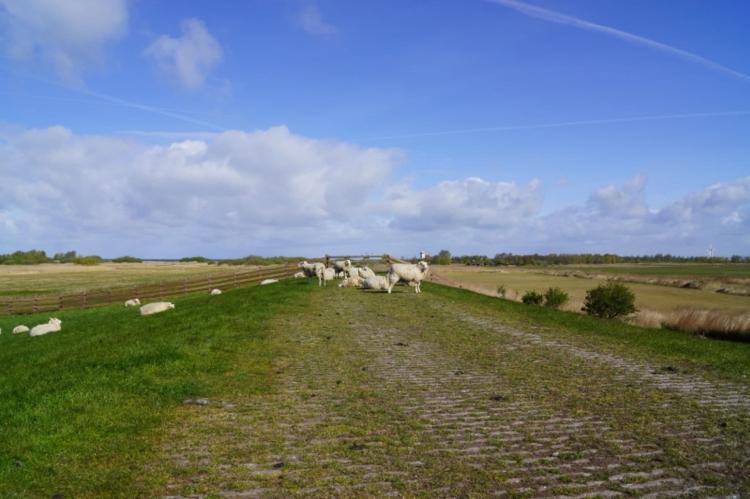 FerienhausNiederlande - Friesland: Skippers Inn  [27]