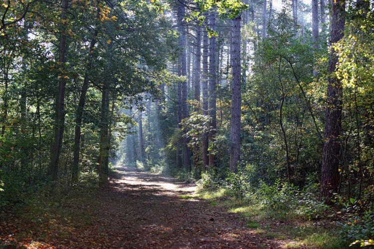 FerienhausNiederlande - Watteninseln: Villa  Hoogelandt 10  [22]