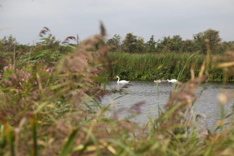 Holiday homeNetherlands - Overijssel: Waterpark Belterwiede 4  [39]