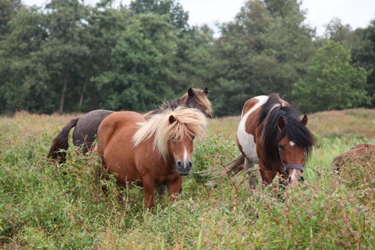 Holiday homeNetherlands - Overijssel: Waterpark Belterwiede 4  [27]
