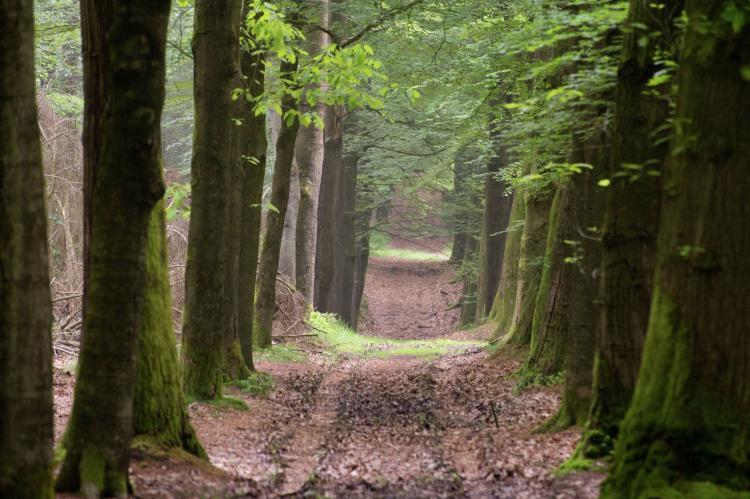 Holiday homeNetherlands - Gelderland: 't Pollenseveld  [26]
