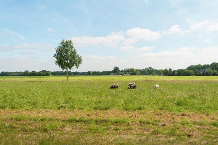 VakantiehuisNederland - Friesland: Haulervaart  [23]