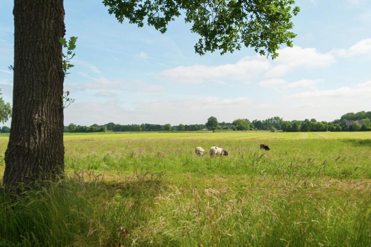 VakantiehuisNederland - Friesland: Haulervaart  [24]