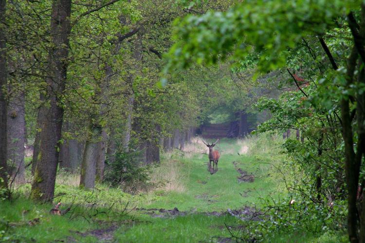 Holiday homeNetherlands - Gelderland: Poort naar de Veluwe  [36]