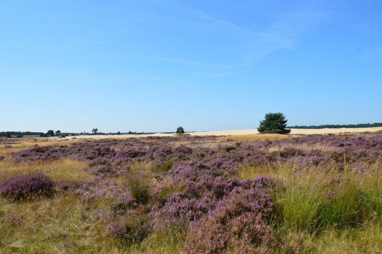 Holiday homeNetherlands - Gelderland: Poort naar de Veluwe  [32]