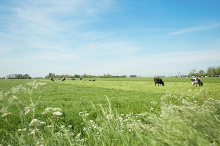 VakantiehuisNederland - Friesland: Pronkkeamer Skrins  [22]