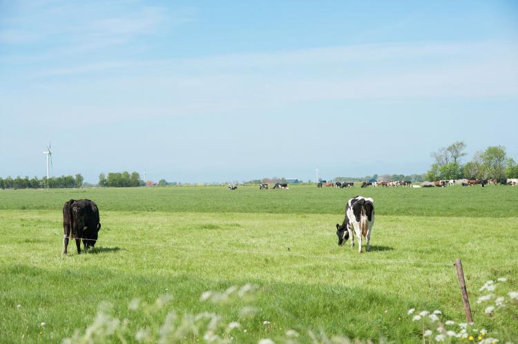 VakantiehuisNederland - Friesland: Pronkkeamer Skrins  [23]